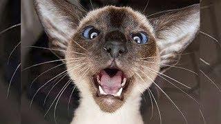 Мяуканье кота - Как кот реагирует на чужое мяуканье