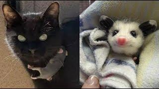 Кошка вернулась из лесу не одна,в придачу к своим котятам принесла ещё одного малыша,но не котёнка!