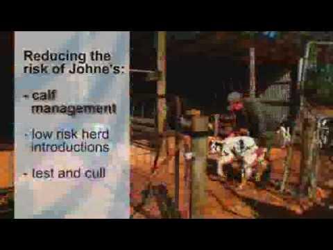 Video Bovine Johne's Disease