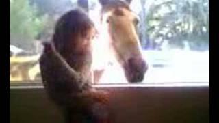 Horse cleans windows