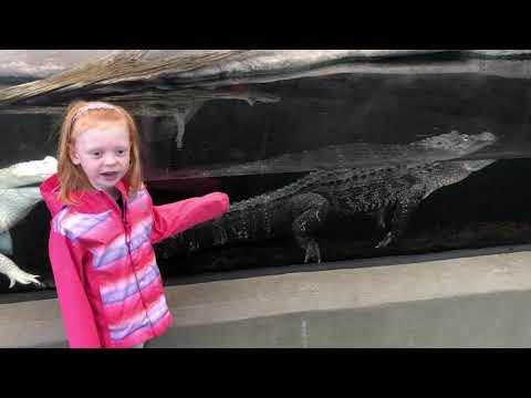 My daughter explaining the difference between the reptiles at the NC aquarium.