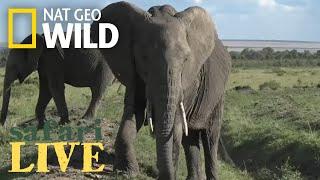 Safari Live - Day 34 | Nat Geo WILD