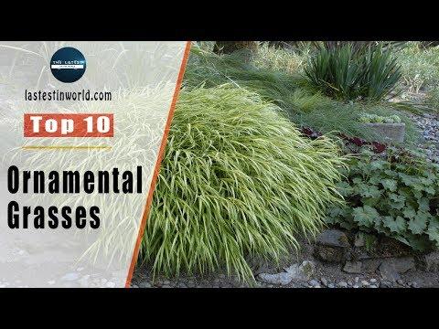 Top 10 Ornamental Grasses
