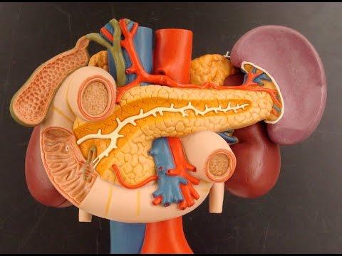 Анализ крови на гепатит с положительный а пцр отрицательный