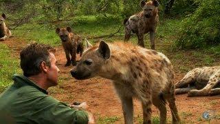 Kim Wolhuter: Maverick Wildlife Filmmaker