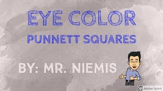 Mr. Niemis' Flipped Lessons - Eye Color And Eye Color Punnett Squares