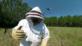 Huge Bumblebee Nest Treatment! BUMBLEBEES ATTACK!!