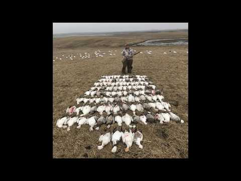 2-guys-and-116-snow-geese