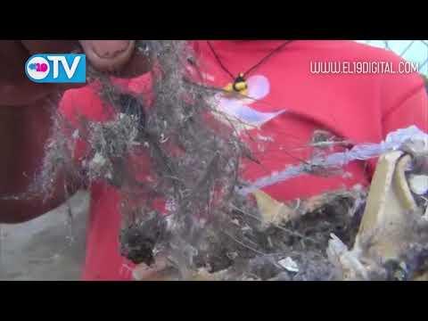 Pelos de pelé caen en Monimbo Masaya