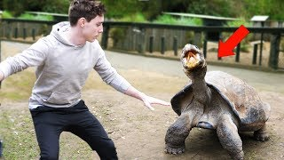 PLAYING WITH INSANE ANIMALS!