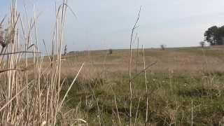preview picture of video 'Naturschutzgebiet Osterberg, Hildesheim'