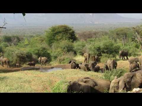 Sarara Elephants