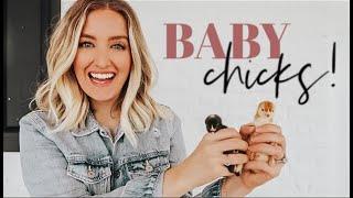 WE GOT BABY CHICKS! Bringing them Home VLOG + Brooder Setup   Becca Bristow