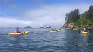 Safari Town Kayak Tours Lincoln City 2018