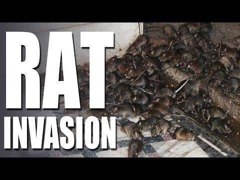 HotAir – Rat Invasion