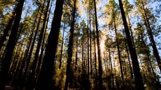 Красивые и душевные видео ролики Потрясающе видео звездного неба и природы в ускоренной съемке