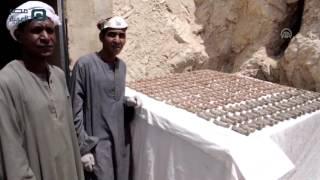 تحميل اغاني مصر العربية | الكشف عن مقبرة فرعونية جنوبي مصر تضم 1050 تمثالا MP3