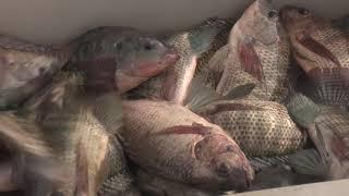 Consolida sus aportes Pescasan Santiago