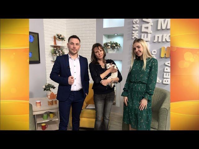 Гости программы «Новый день»  Ирина Глебченко и Тоффи