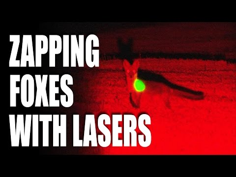 Zapping foxes with lasers