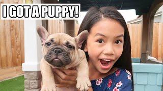 I GOT A PUPPY!!!
