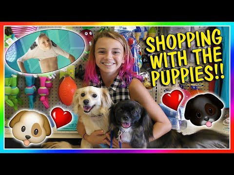 OUR PUPPIES GO TOY SHOPPING | TYLER GETS STUCK IN HIS FOOTBALL GEAR | We Are The Davises