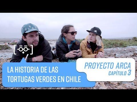 Capítulo 4: La historia de las tortugas verdes en Chile | Proyecto Arca | Temporada 2