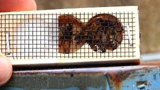 Videos on bee-haviour