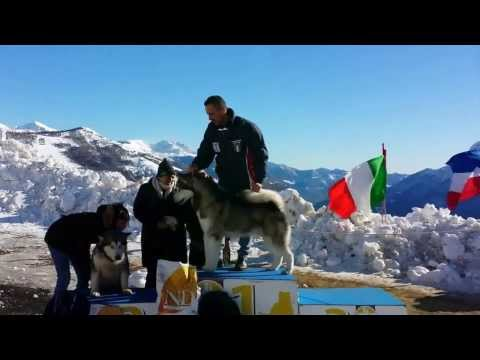 Video di Alpe Giumello