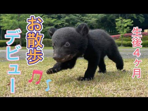 【生後4ヶ月】ツキノワグマの赤ちゃん「望鈴ちゃん」お散歩デビュー!