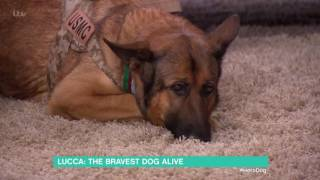 Lucca: The Bravest Dog Alive | This Morning