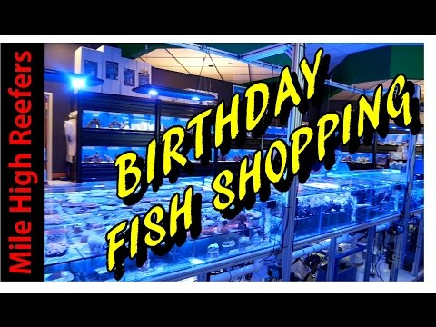Birthday Fish Shopping and Leopard Wrasse Problems (Reef Vlog)