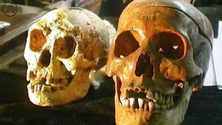 Уничтожение непослушных археологов. Александр Белов