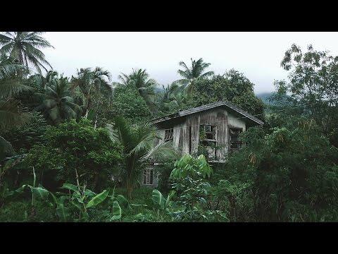 Nature Sounds Звуки Природы Ночные Джунгли Сон на Природе Sleep in the Jungle