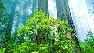 Relaxing Music for Stress Relief. Calming Music for Meditation, Healing Therapy, Spa, Sleep