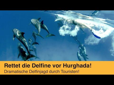 Delfine hautnah - leiden für den Tourismus in Hurghada/Ägypten