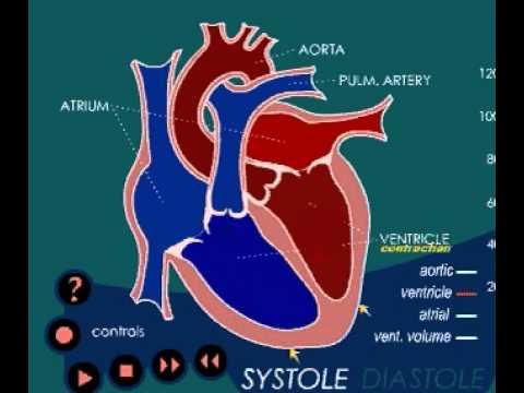 Hypertensive Zustand bei Sportlern