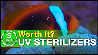 What does a UV Sterilizer actually do? What does UV not do? Is it worth the investment?