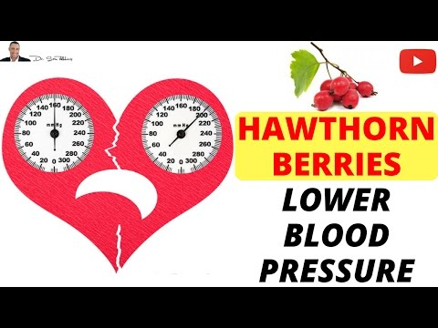 Video ???? Hawthorn Berry TIP - What form lowers your blood pressure?