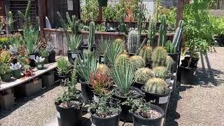 H&H Nursery Cactus Garden 2020