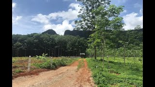 Over 8 Rai of Land for Sale in Khao Thong, Krabi - Close to Water Activities Area