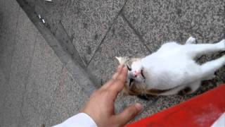 تحميل و مشاهدة عري الكوبرى يتحكحك cobra cat MP3