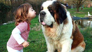 Baby Playing with St Bernard Dog A Beautiful friendship | Dog loves Baby Compilation