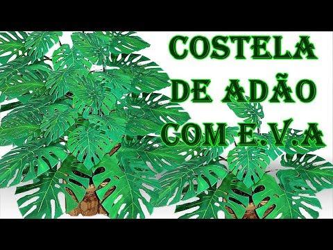planta Costela de Adão
