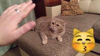 Кот говорит Я тебя НЕ ЛЮБЛЮ. Самое НЕ милое видео!