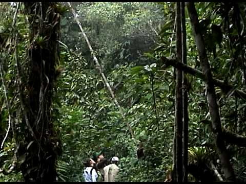 Otra reserva de PROAVES COLOMBIA