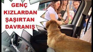 Otostop Çeken Genç Kızların Arabada Köpek Görünce Yaptığı Şaşırtan Hareket
