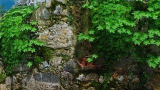 Skyrim Mod Showcase: Natural Color Ivy Vines