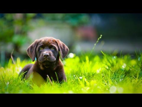 Homeopátia kutyáknak prosztatagyulladás