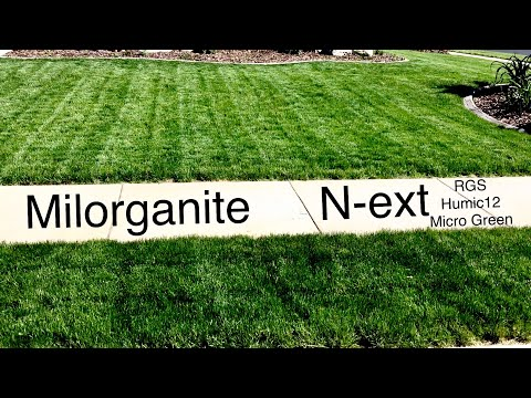 Before and After Humic12 Apply Milorganite RGS Micro Green